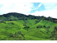 Beautiful Scenery in Cameron Highlands